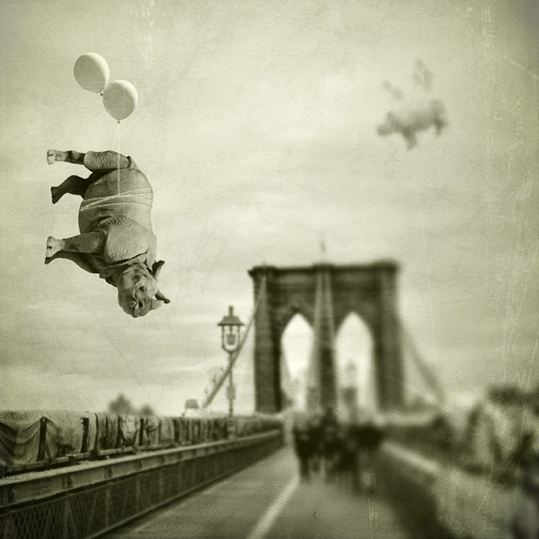 Meet me on the Brooklyn Bridge  Janine Graf
