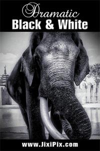 Dramatic Black & White iPhone