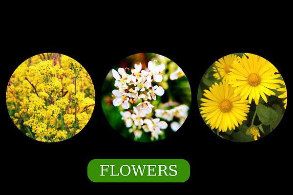 PicFrame 6 Shapes